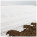 Balta agroplėvelė 20 g/m2, 3,2 m pločio